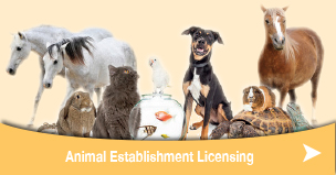newsize-animal-establishment-licensing.jpg