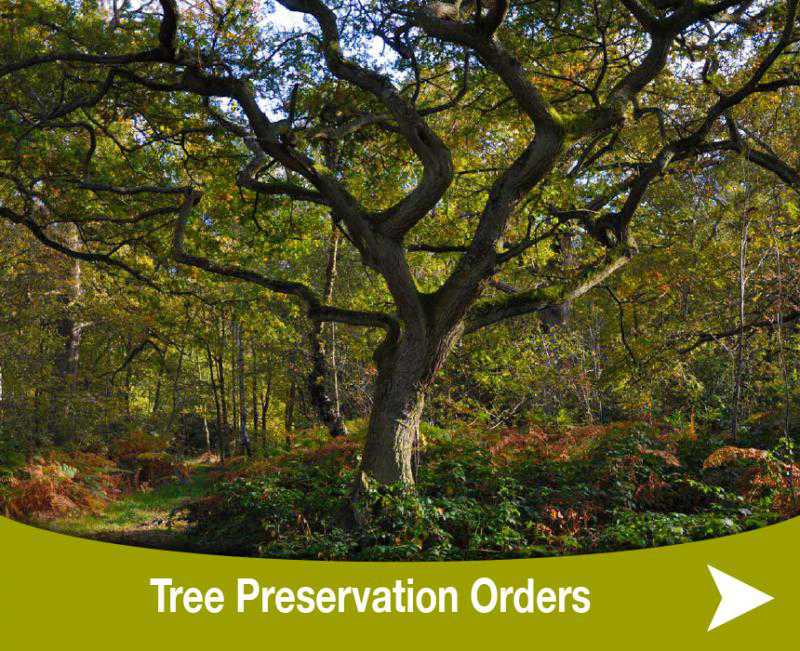 Tree preservation orders (TPOs)