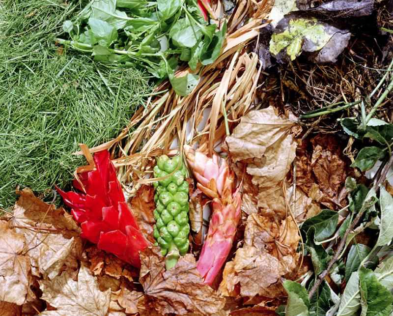 web0039-composting-close-up-scattered-garden-waste-and-grass-clippings-web-version-72ppi.jpg