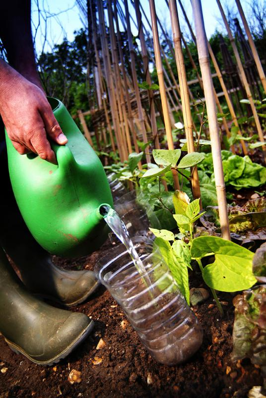 web0674-re-using-plastic-bottle-on-allotment-for-catching-slugs-web-version-72ppi.jpg